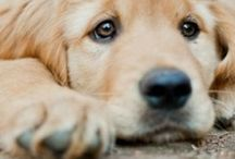 Perros y cachorros / by Juls MB GE