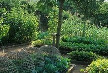 Garden ideas / gardening / by Talana Olivier