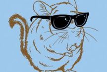 Chinchillin Chinchilla Chill Chill