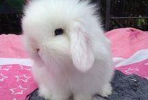 Bunnylove <3 / All about bunnies!   Schon mit 6 Jahren hab ich meinen erstes Zwergkanninchen bekommen und seitdem begleiten mich diese kleinen süßen pluschigen Zwerge.   #bunnies #hasen #kanninchen #liebe #haustier #pet #cute #cutenessoverload