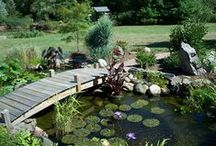 Outside / Landscaping, gardening, curb appeal -- all things exterior!