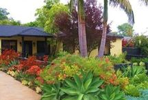 Drought Resistant Landscaping!