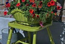 scaune si flori