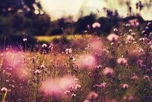 Blumen | Flower