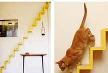 Cool cat products / Nothing but the best cat products to make your feline's life fancy!