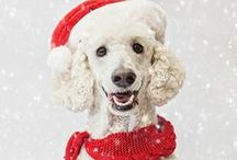 A dog-friendly Christmas / Tips and tricks for celebrating Christmas with your dog.