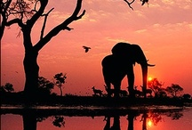 AFRICA  / by Kathy Sircy