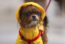 Dog rain apparel / Dog-friendly fashions designed to keep your pup dry in the rain!