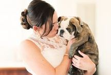 Dog-friendly weddings / Ideas and inspiration for throwing a dog-friendly wedding and making sure that your furry friend is part of the big day.
