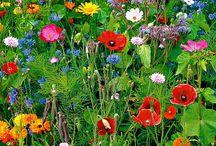 In de tuin. / Leven in de tuin.