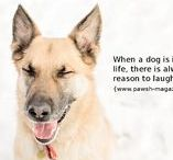 "Dog Quotes | ""As Dogs Would Say"" / Original dog quotes and #dogphotography spouting wisdom from our canine friends!"