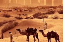 Scent of Arabia