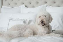 Comfy Companions / Our best friends and furry companions deserve a good night's sleep too!