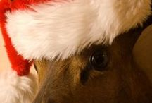 Christmas in Wales... / Join us at the Groes Inn for a cosy Christmas.. http://www.groesinn.com/christmas-new-year/