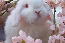 Conejitos /  Bunnies  /  ilustraciones