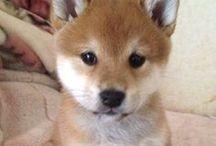 adorable animals *-*