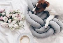 Dog Flatlays / Beautiful flatlays featuring dogs and cosy moments!