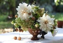 Flowers / by Dana Dunphy