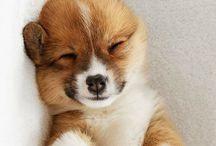 Puppy & Ducky Love