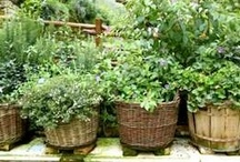 Home Garden Tips / by Gaia Health Blog