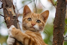 Here, kitty, kitty! / Cats ...they are beautiful and funny animals! / by Katie Clemens