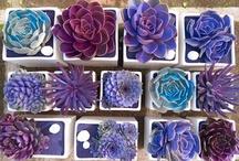 Garden - Succulents To Pretty / by Marjorie Sakelik
