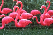 Animals - Flamingos Rule / by Marjorie Sakelik