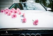 Car Decor / by Kailey Deal ʚϊɞ