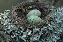 Animals - Birds & Nests / by Marjorie Sakelik