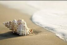 Beach themed _______ shower