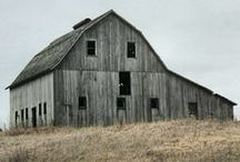 Barns / by Denise Ferrari