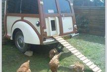 CHICKEN IDEAS / chicken ideas