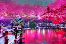 Japan Lovin' / All things Japanese (^∇^) / by Sonji Goodman