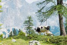 TRAVEL | Tirol, My Love