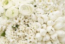 White Florals / Fresh creamy white flowers