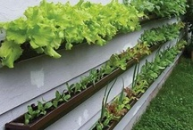 Gutters -  Upcycle Reuse Recycle Repurpose DIY