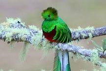 Photos: Birds * / by Krista Herbst