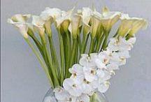 Flowers/Kwiaty