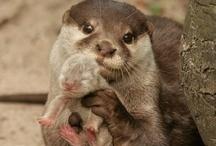 Animal cuties! / by Breana Quesada