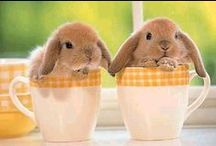BUNNY & EASTER