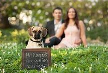 Wedding Pets / Your pets are family too... Here are some of our favorite pins!