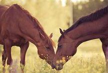 Lovely horses