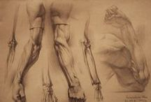 Anatomy & Reference / An album consisting of image references that study poses and parts of the body.
