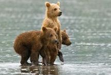 Ours, panda, ours polaires