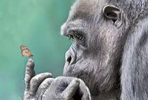 Singes, gorilles, lémuriens, paresseux