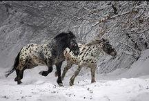 Chevaux, chèvres, lamas, ânes, moutons, cochons