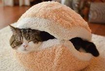 Pets Need Homes Too / Everybody needs a home.