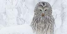 ▲ Wildlife [Animals] / Fauna, animals... the impressive variety of nature.