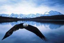 ▲ Alaska