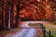 Beautiful Fall / Fall...the year's last and loveliest smile!